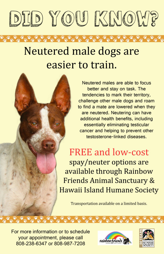 cost to nueter dog