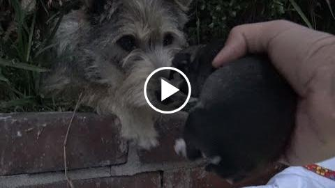 watchdog how thorough stray mom reacted  hopper For Paws reached out for her puppies.