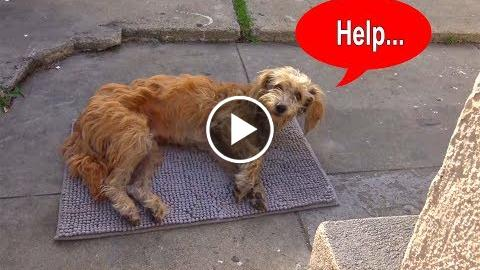 hopelessness For Paws:  dog walks  a yawp and theocracy collapses…